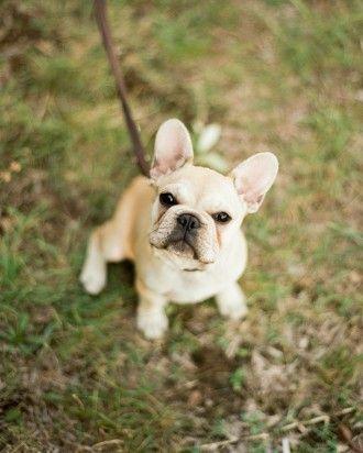 Regina And Jack's Dream Destination Wedding In Tuscany - Puppy Love