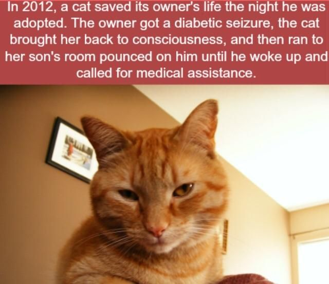 Cat Saves Owner From A Diabetic Seizure