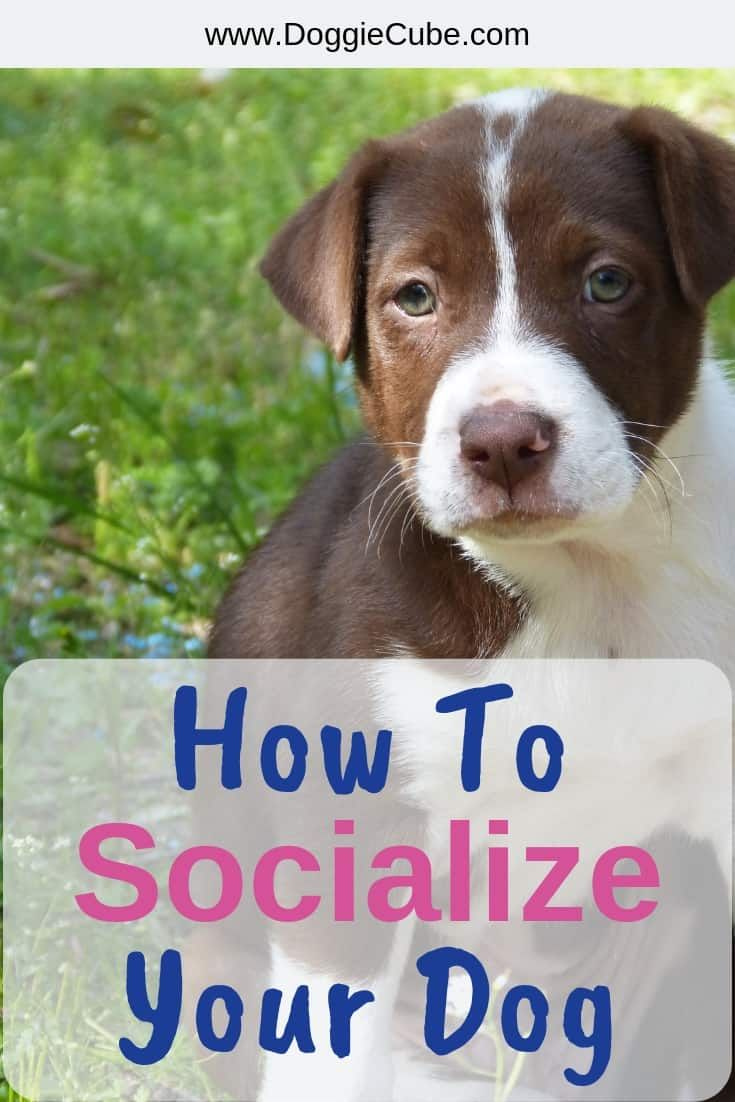 How to socialize your dog socializing dogs dogs