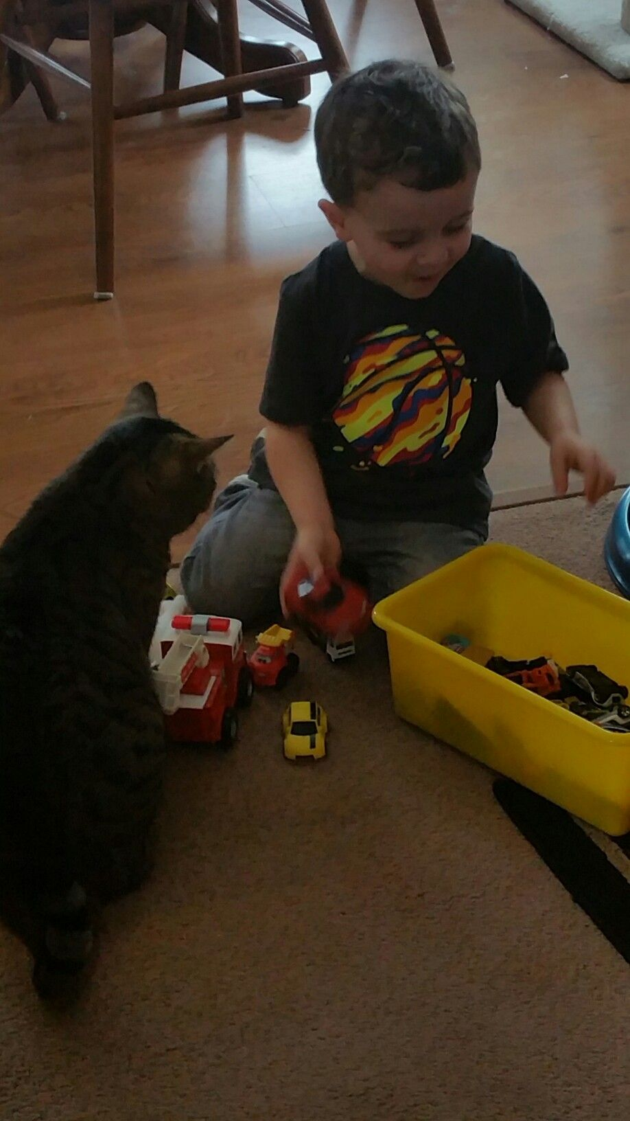 Toys and me images  This miniature human is sharing his toys with me  Feline