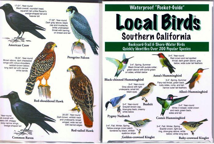 Southern California Birds   Google Search