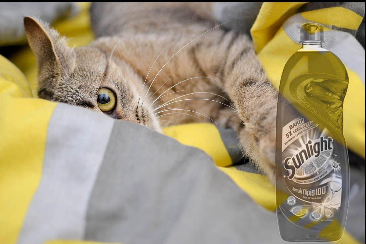 Low Budget Begini Cara Menghilangkan Kutu Kucing Dengan Sunlight Di 2021 Hewan Peliharaan Berbulu Pembasmi