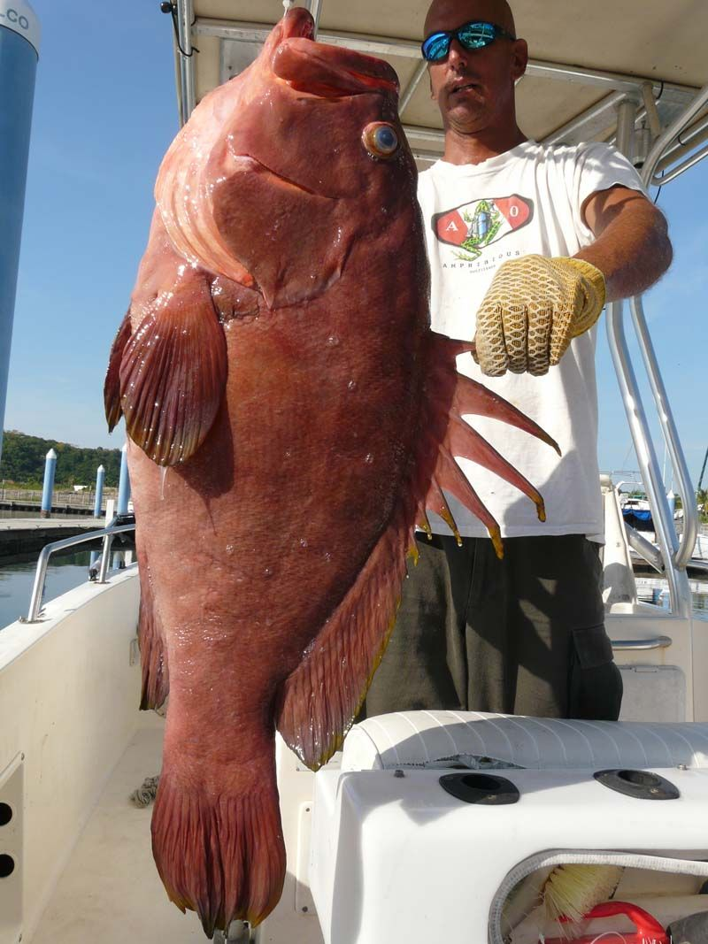 Potential World Record Gulf Coney Grouper 32 Lbs 5 Oz Tuna