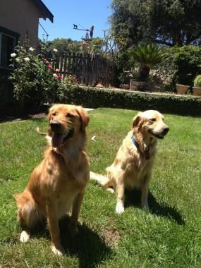 Dog Training Dog Training Dog Training Obedience Dogs