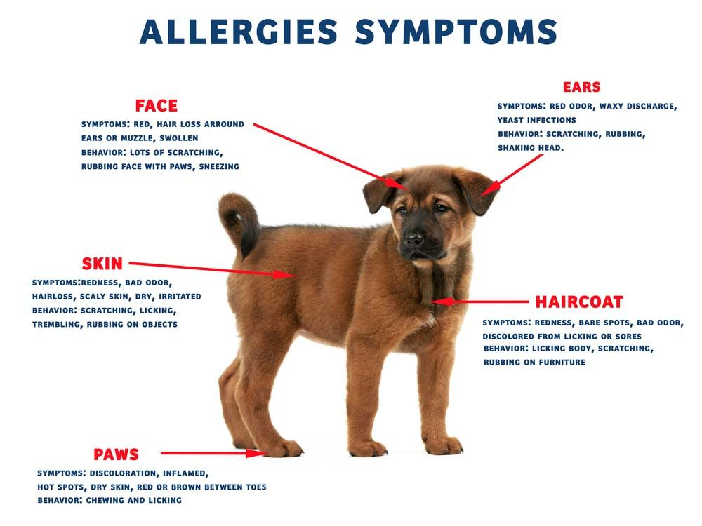 12 Homemade Foods For Dogs With Allergies Dog Allergy Symptoms