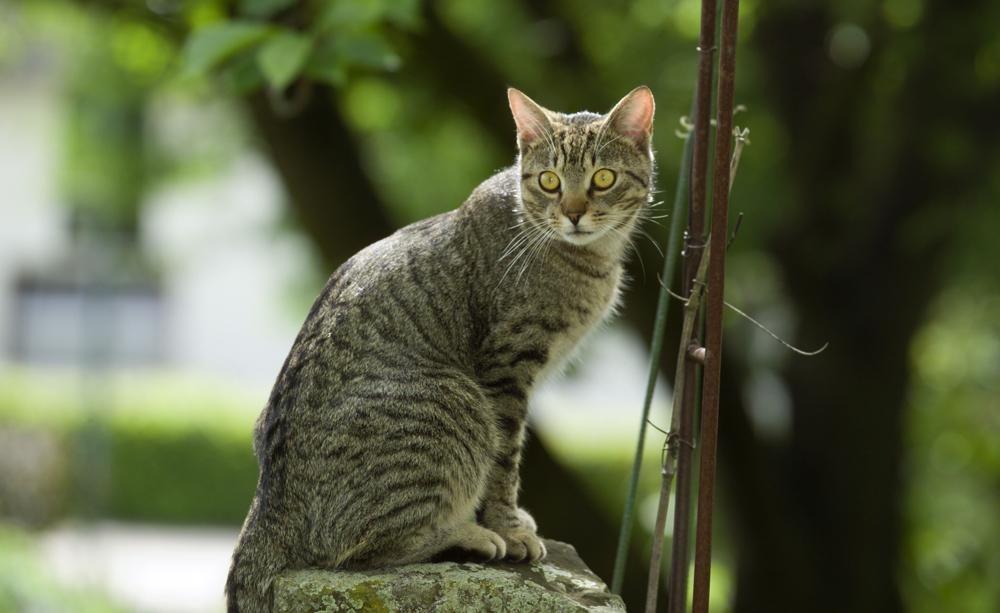 Great Katzenkot im Garten unterbinden