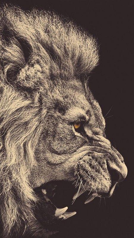 lion_mane_big_cat_grin_93320_640x1136