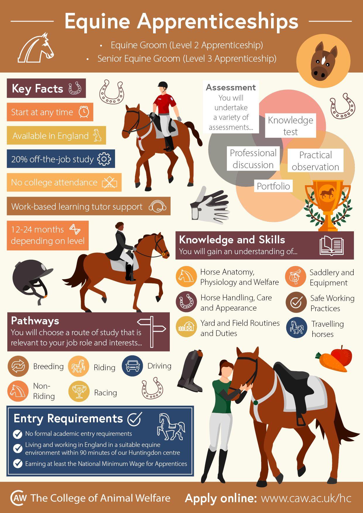 Equine Apprenticeships Infographic In 2020 Horse Care Apprenticeship Horses