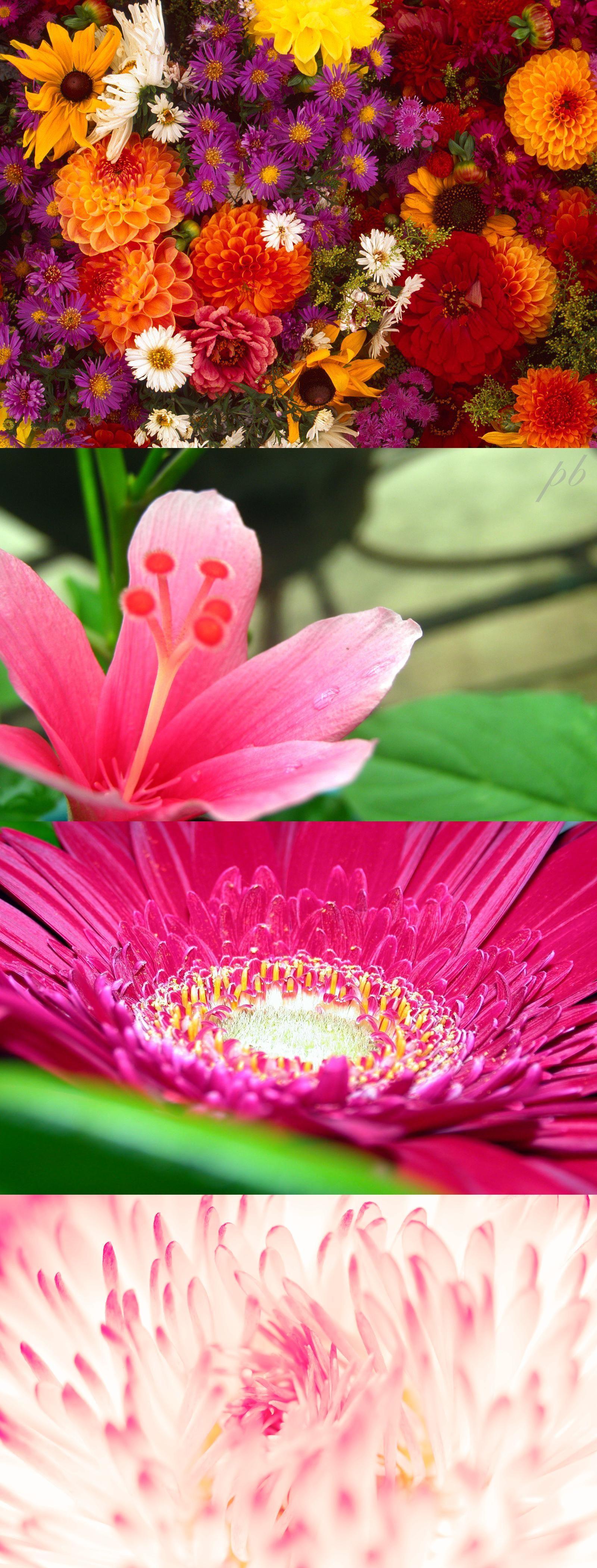 Spring Daisy Flower