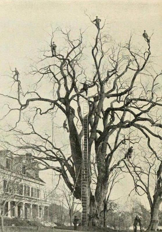 Unedited History Photographs Not Appropriate For All Eyes Tree Pruning History Landscape