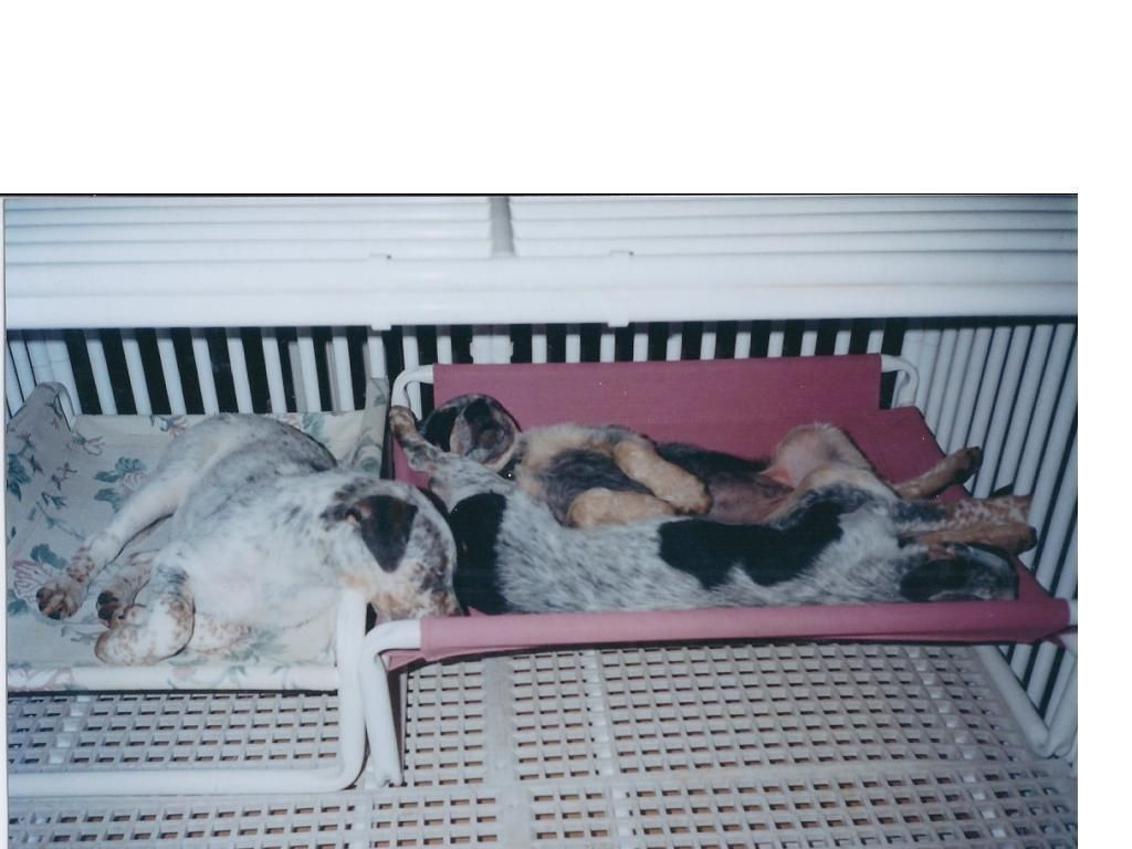 Cold weather pet care rover company blog indoor dog