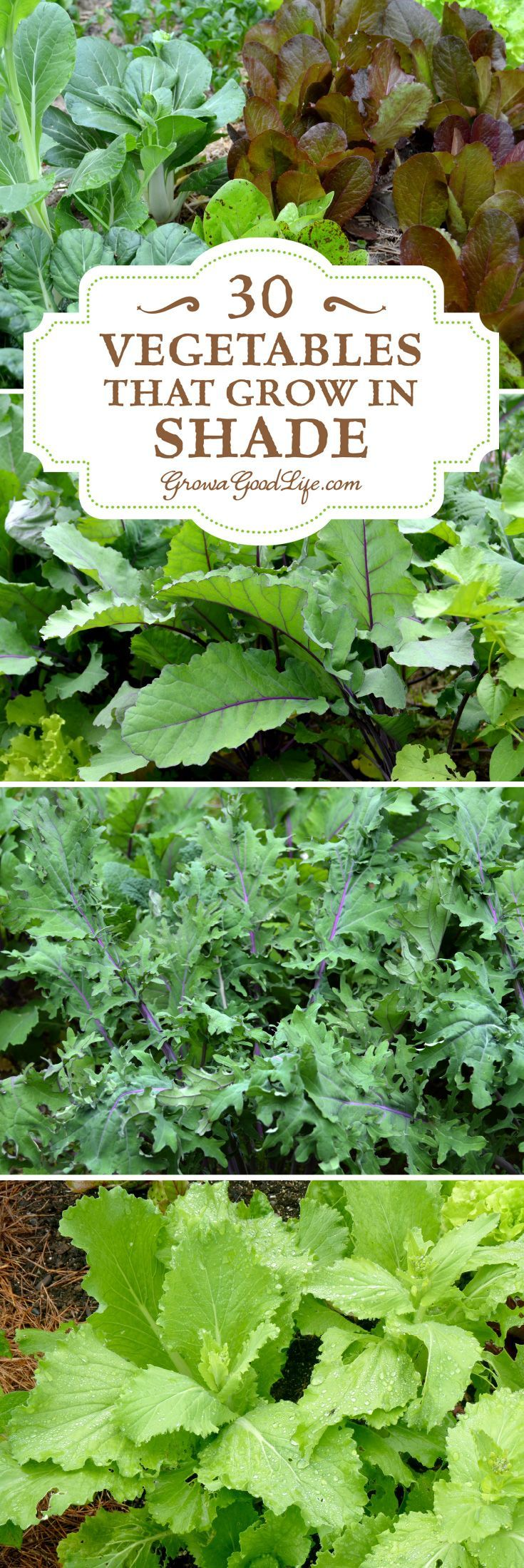30+ Vegetables That Grow in Shade #veggiegardens