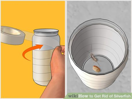 Image titled Get Rid of Silverfish Step 2