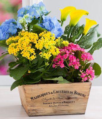 7 Kwiatow Blog O Kwiatach I Florystyce Slubnej Kwiaty Doniczkowe Hydrangea Arrangements Spring Bulbs Garden House Plants For Sale