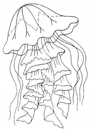 Jellyfish coloring page 1 | JELLYFISH COLORING BOOK | Pinterest ...