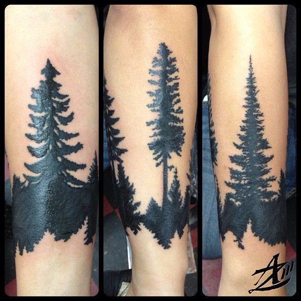 black and white pine tree - Google Search | Trees | Forest ...