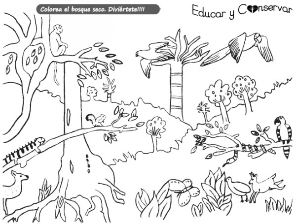 Imagenes Para Colorear Sobre Biodiversidad Busqueda De Google School Posters Science Fair Art