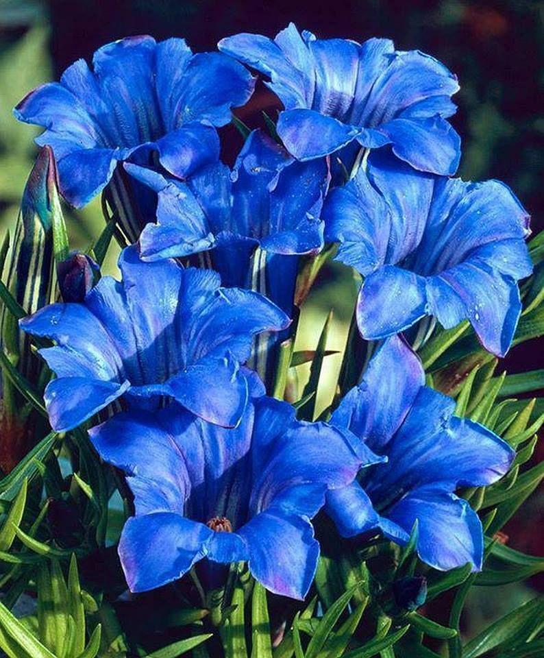 Pin De Evinha Em Blue Flores Maravilhosas Flores