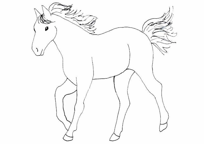 bmimage722988 842×595  malvorlagen pferde