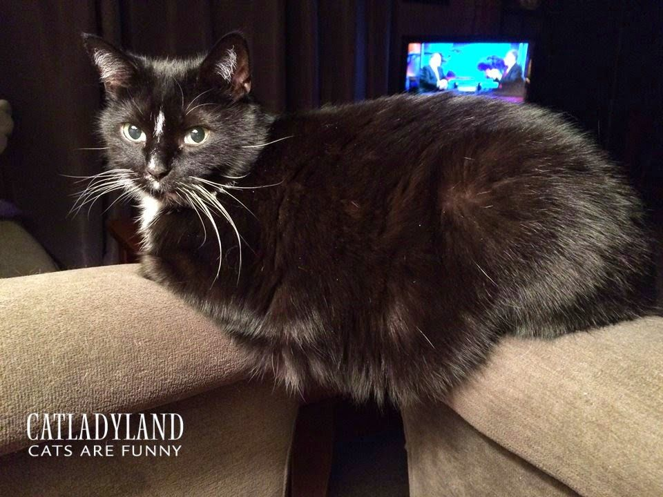 Catladyland: Cats are Funny: My Cat Has Mad Core Strength