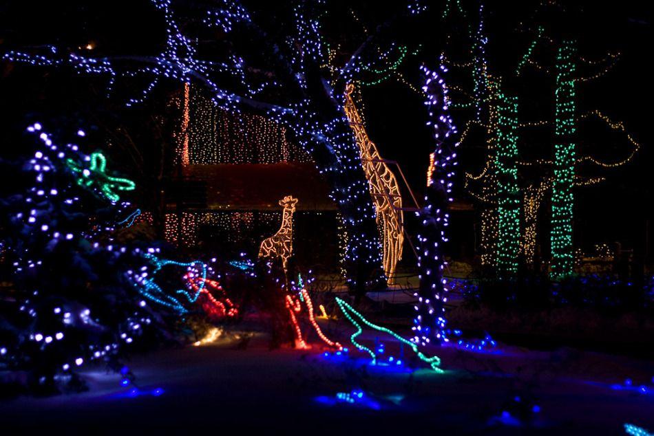 Calgary Zoo Lights   Calgary Things To Do   Pinterest   Zoo lights ...