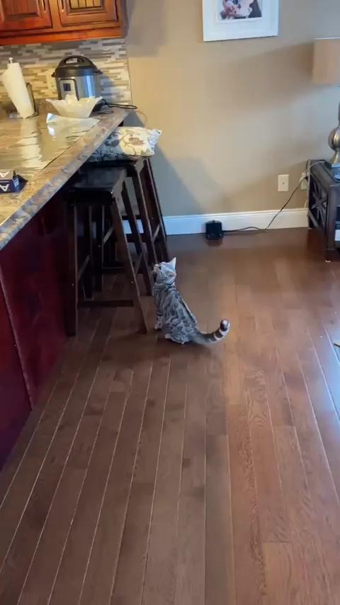 Photo of ¡Otro gatito que reacciona al papel de aluminio en el mostrador!