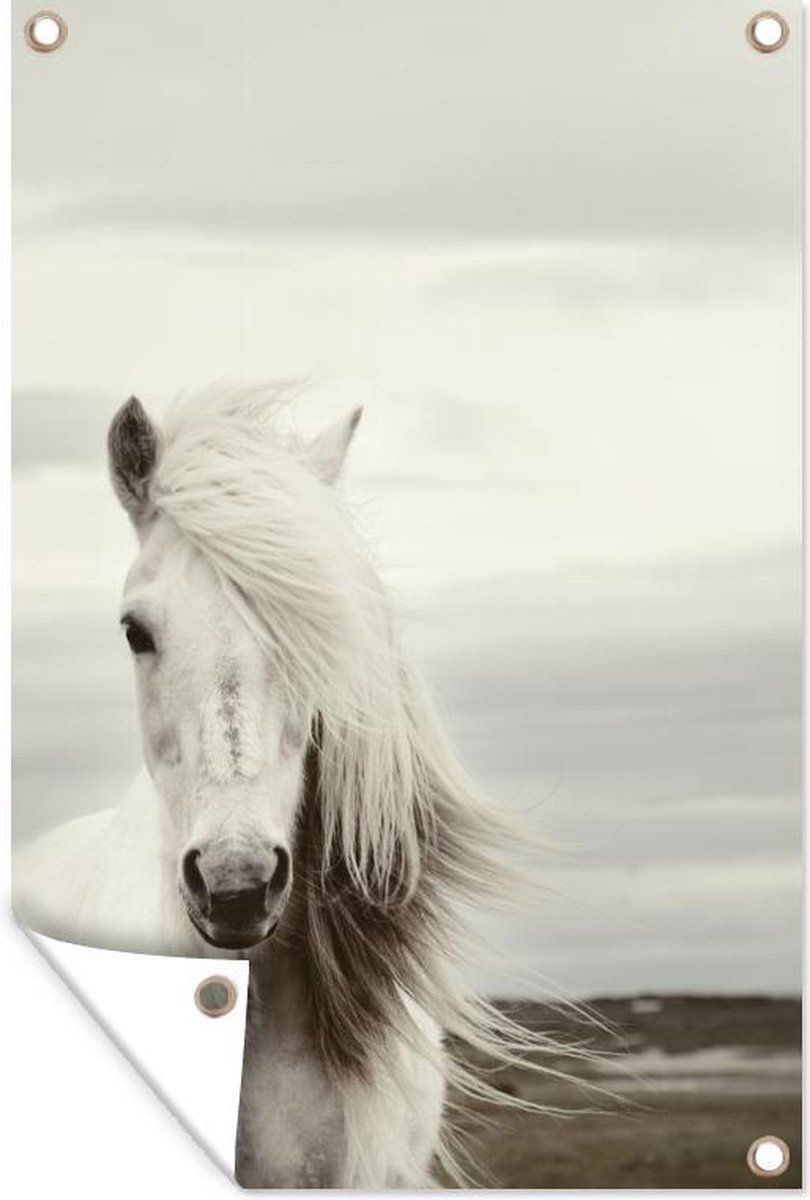 Tuinposter Een Wit Paard Aan Zee 40x60 Cm In 2021 Foto S Van Paarden Witte Paarden Wit Paard