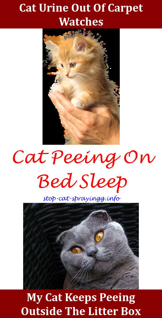 Keep cat from peeing on carpet