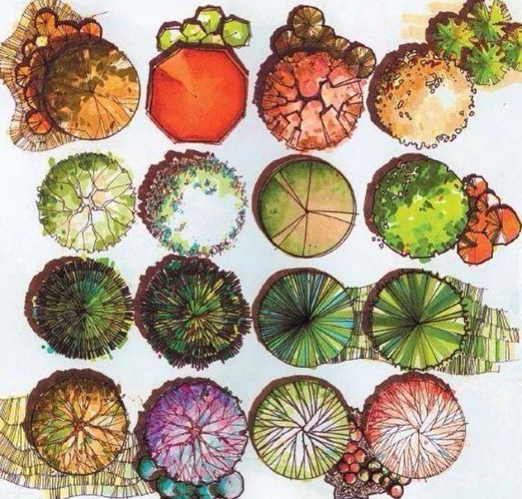 Baume Pflanzen Garten Landschaftszeichnungen Architektur Zeichnungen Skizzen Landschaftsarchitektur Landschaftsbau Plastik Grafiken