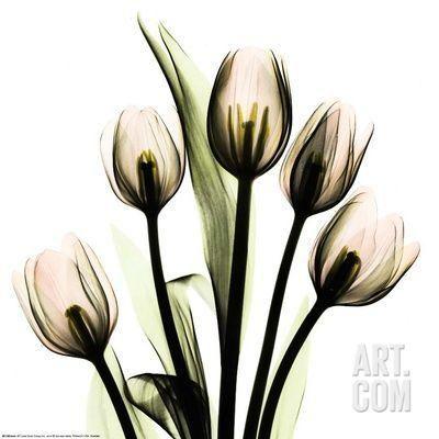 Crystal Flowers X-ray, Tulip Bouquet Art Print by Albert Koetsier at Art.com