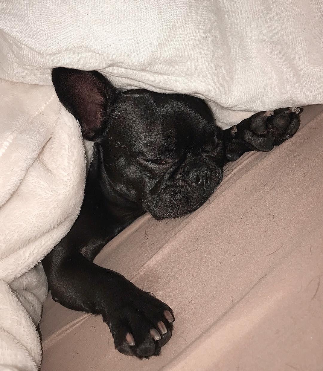 Pin By Darsel Keiller On Sleeping Dogs Sleeping Dogs Fur Friend