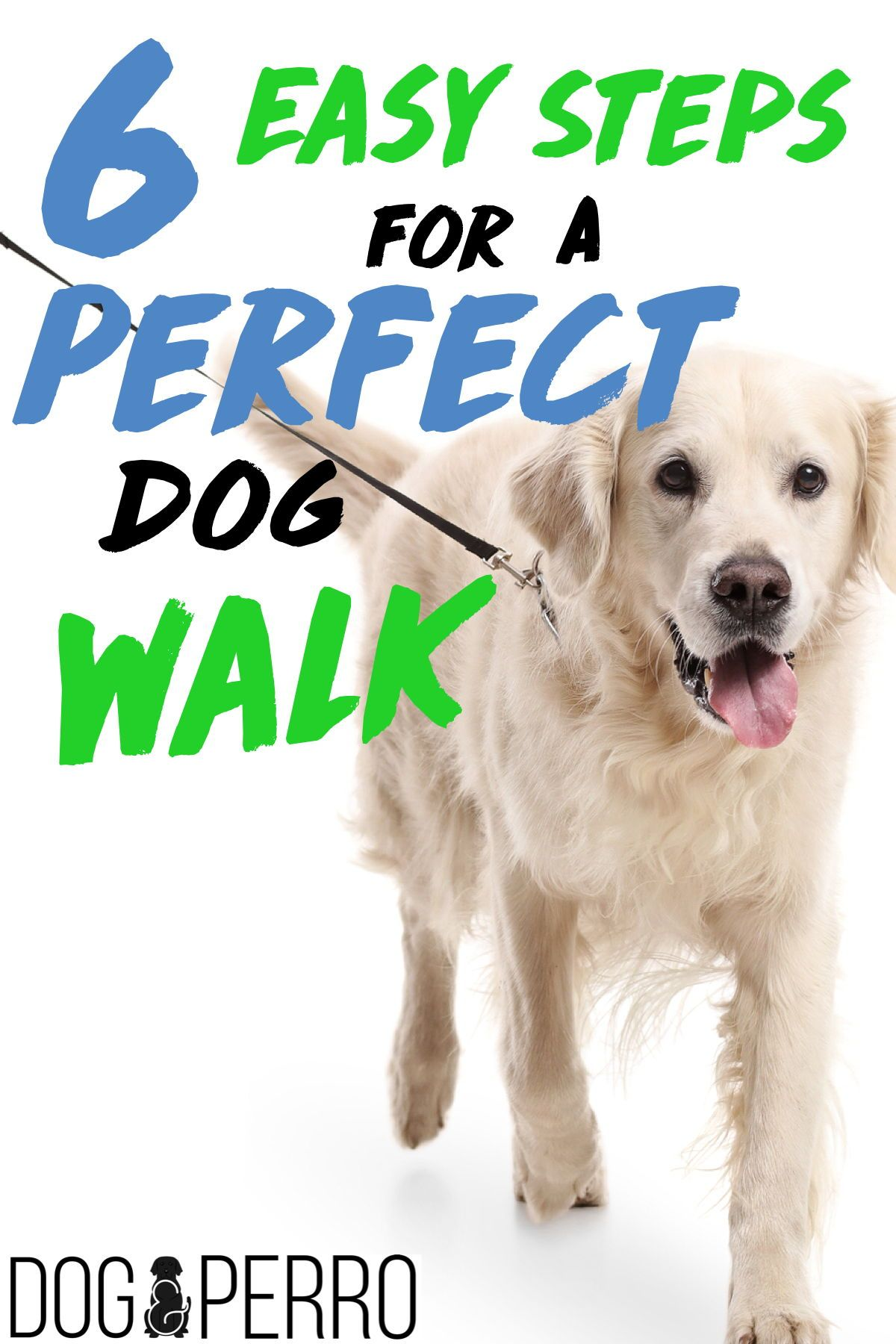 Think You Know How To Walk Your Dog Dog Walking Dog Activities