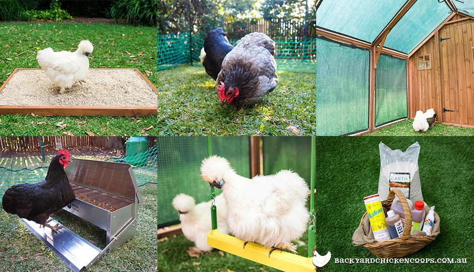 6 Essential Accessories For Your Backyard Chicken Coop in ...
