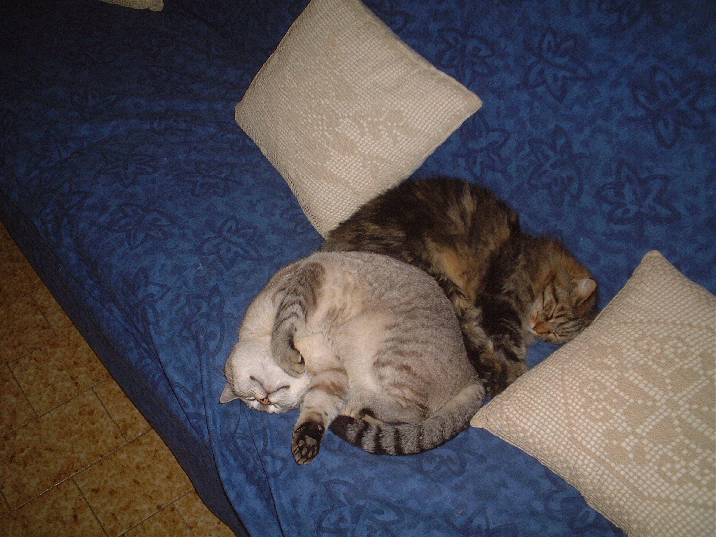 Come si dorme bene in compagnia