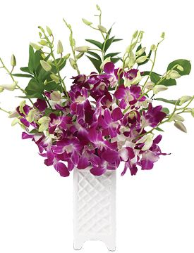 Summer Island Orchids starting at $89.95 #Orchids #SummerFlowers