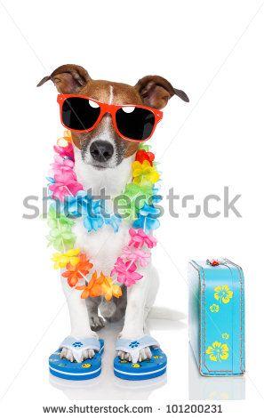 Tourist Dog With Hawaiian Lei And A Bag By Javier Brosch Via