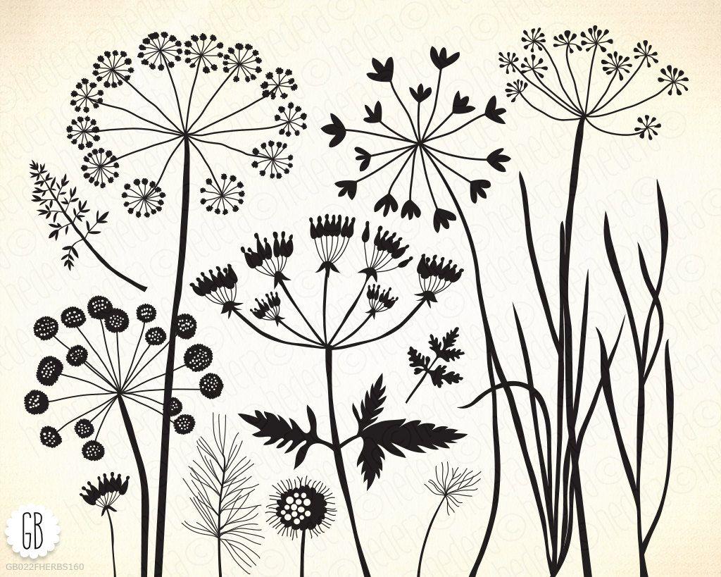 Wildkräuter, Wildblumen, Grün, Vektor Löwenzahn, Pflanzen, Flora, Gras, Unkraut, ClipArt, botanisch, Königin Ann Spitze. Sofortiger Download 160GB