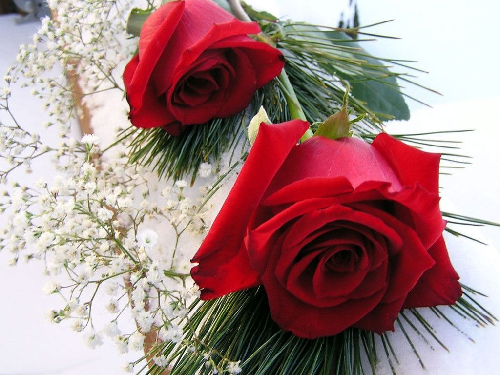 Red roses wallpaper - Love Roses Wallpaper Valentines Day Holidays Wallpapers In Jpg
