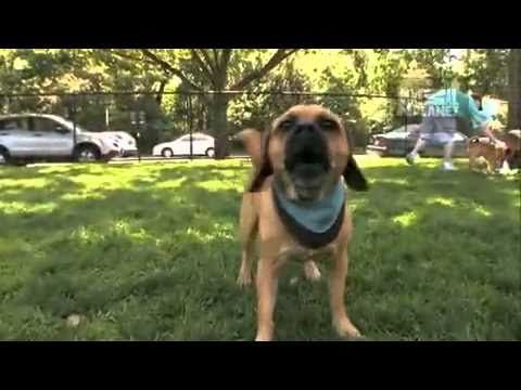 Trucker Dogs 101 Puggle Dogs 101 Dogs Make Me Smile