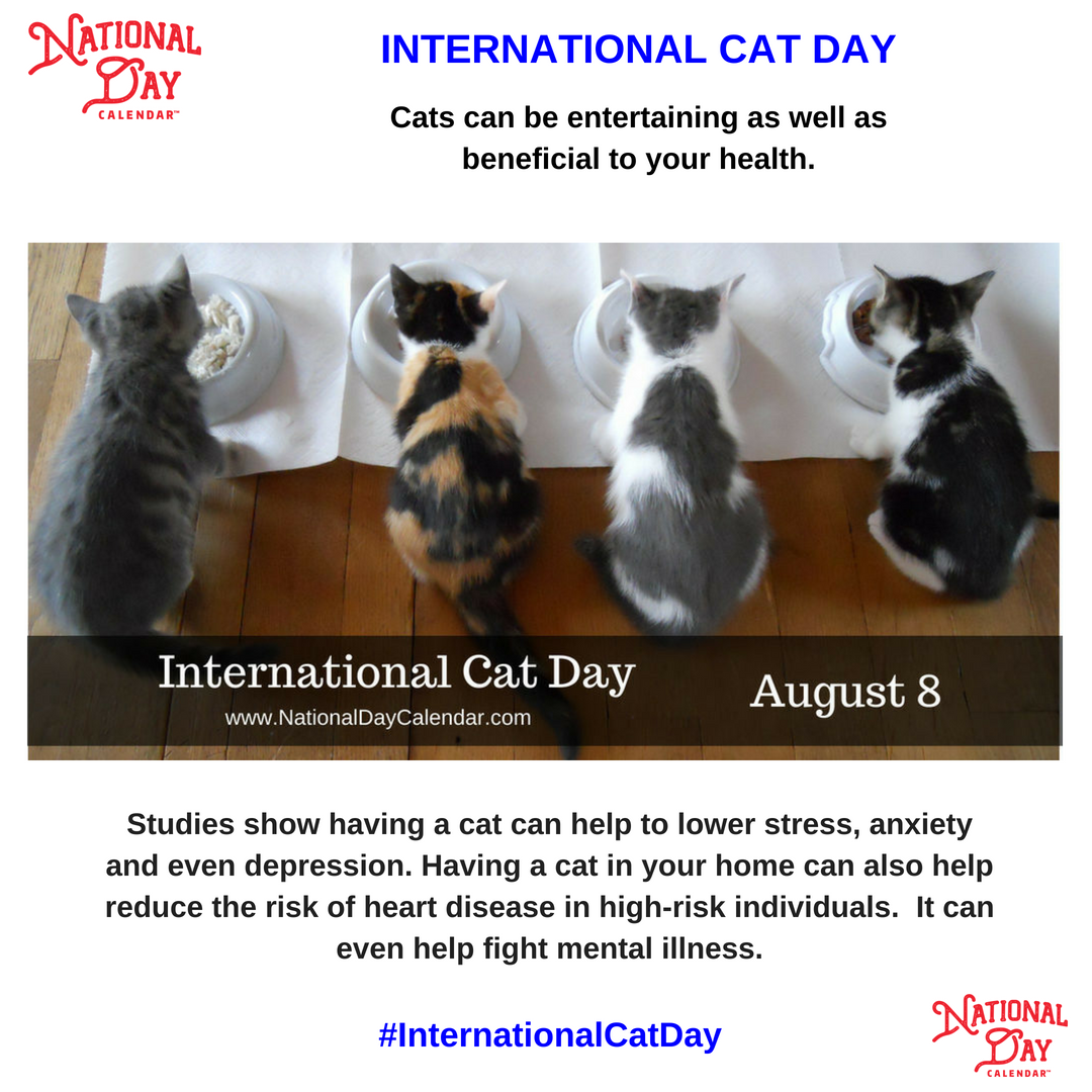 International Cat Day August 8 National Day Calendar International Cat Day Cat Day National Day Calendar