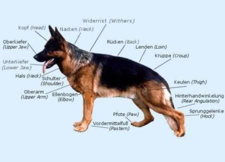 German Shepherd Breed Standard German Shepherd Breeds German