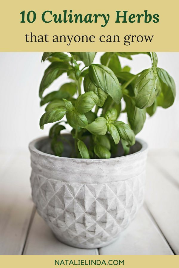 10 Herbs That Are Super Easy To Grow Growing Herbs 400 x 300