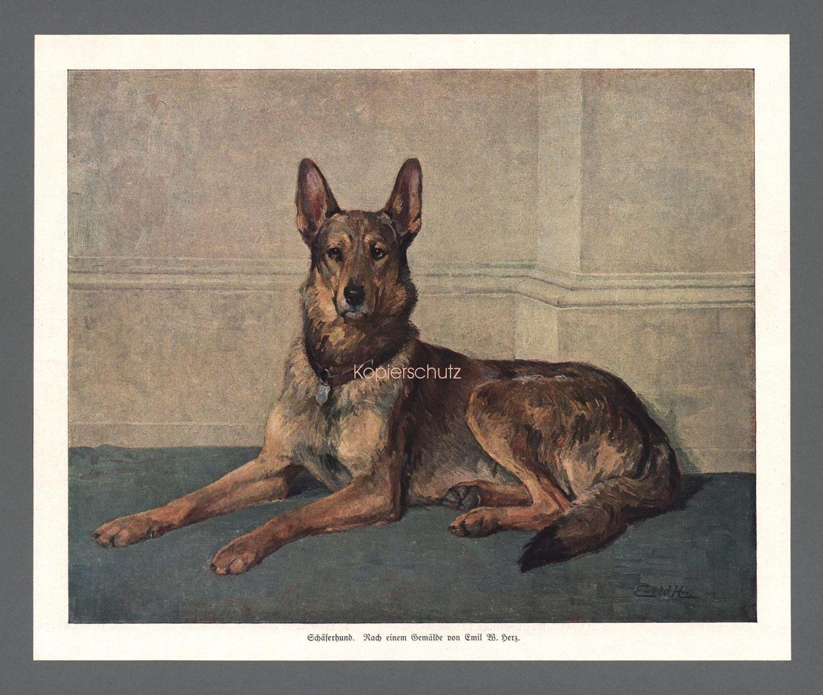 Emil W. Herz Kunstdruck Schäferhund Hund Tier Frankfurt a