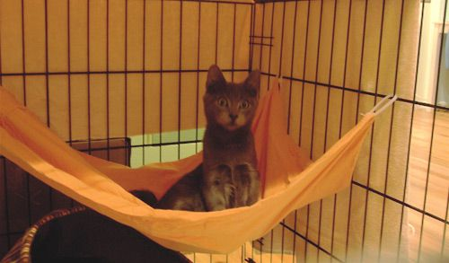 Sew a cat/ferret hammock for shelter cages. | Diy cat