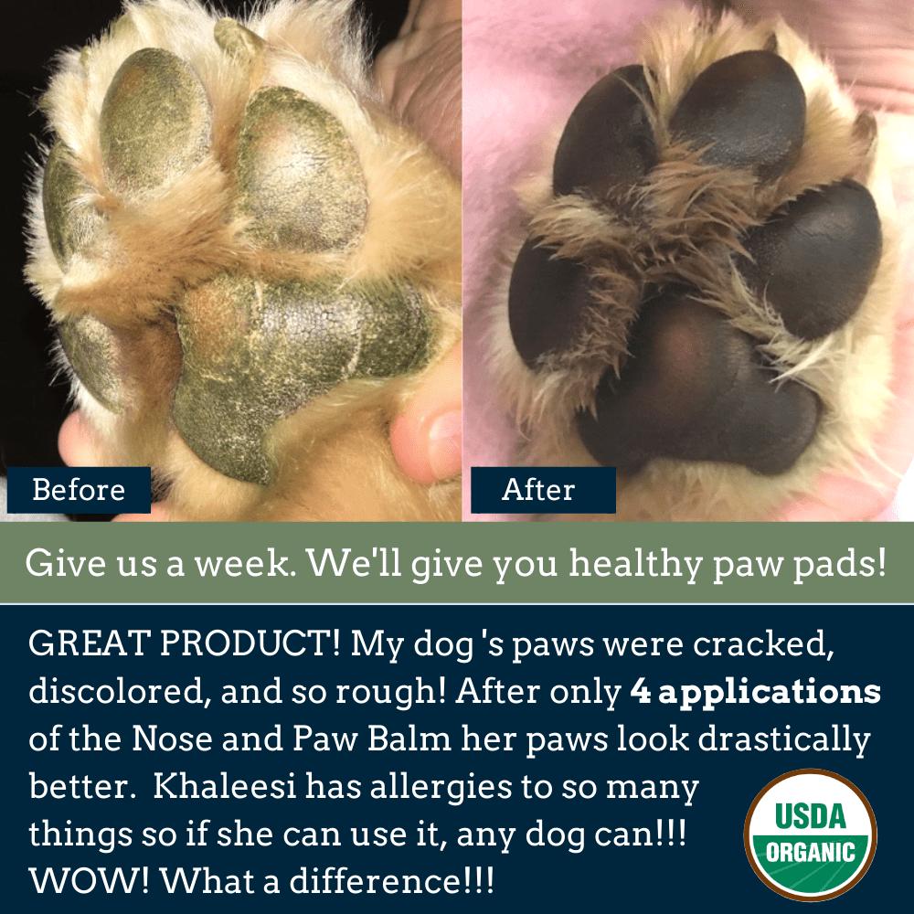 Usda Certified Organic Healing Balm For Dog Nose And Paw Pads In 2020 The Balm Healing Balm Paw Pads