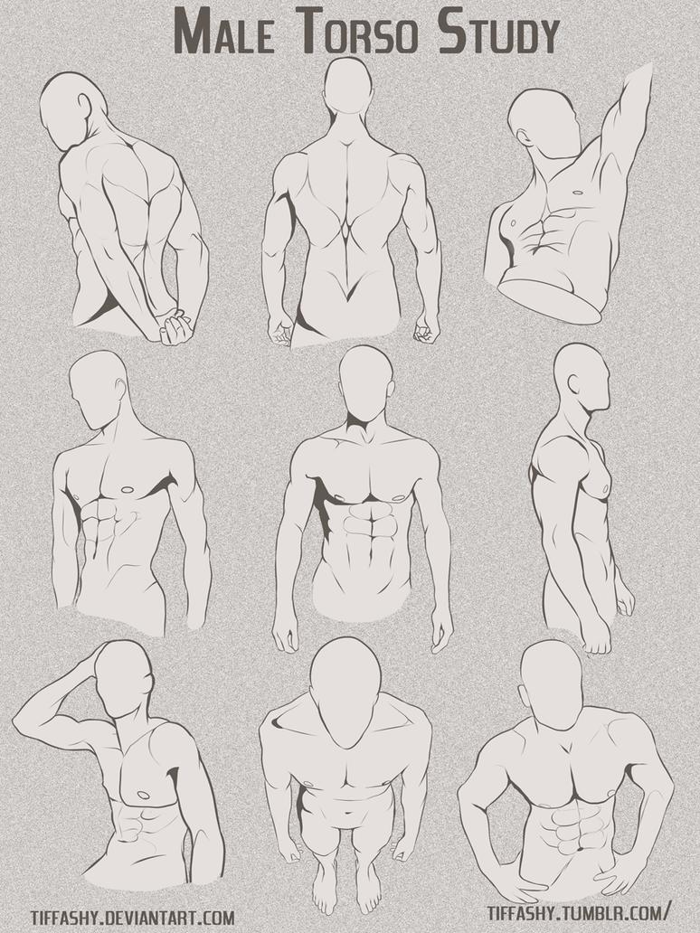Male Torso/Chest Study by TIFFASHY on DeviantArt