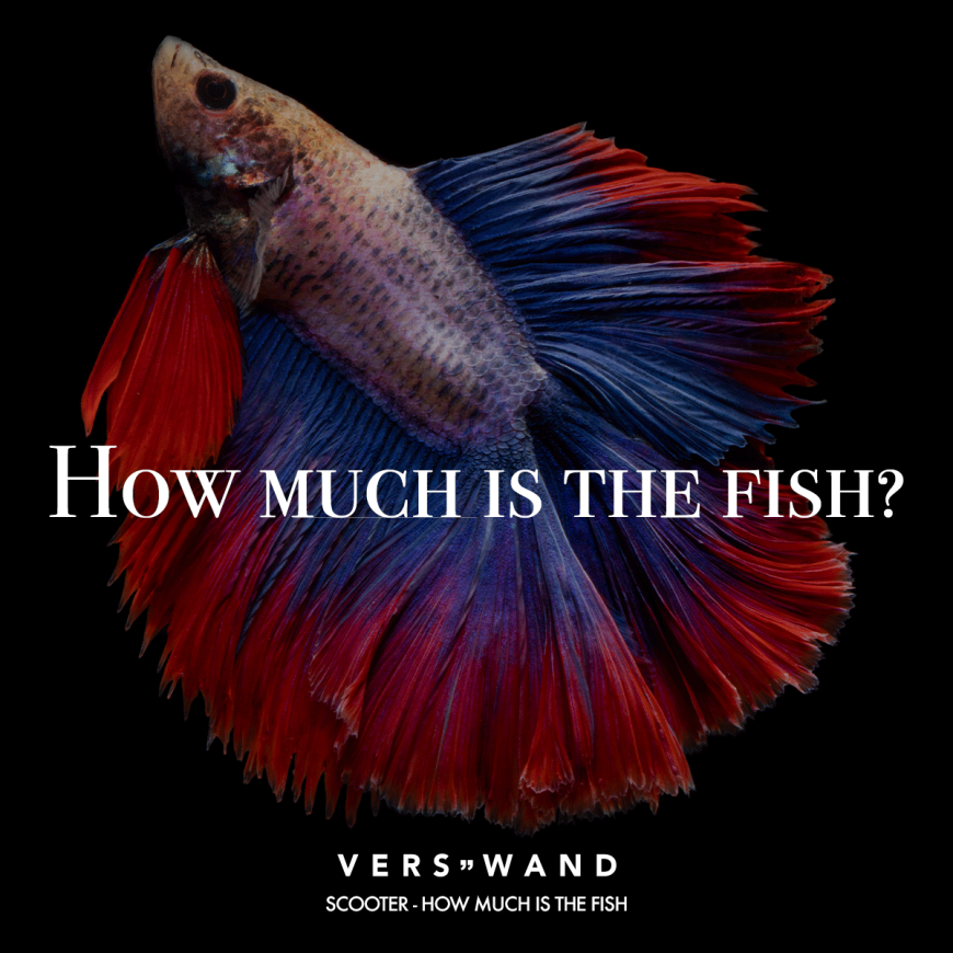 Visual Statements How Much Is The Fish Scooter Spruche Zitate Quotes Verswand Musik Band Artist Visual Statements Schone Spruche Leben Verswand
