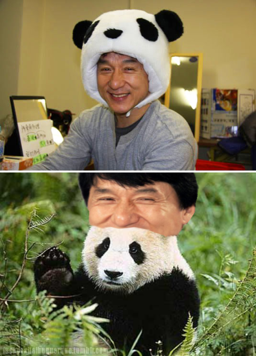 I Would Wear Both Hats Anytime Anywhere Jackie Chan Funny Pictures Best Funny Pictures