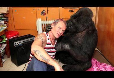 Red Hot Chili Peppers' bassist Flea meets Koko the gorilla - BBC News