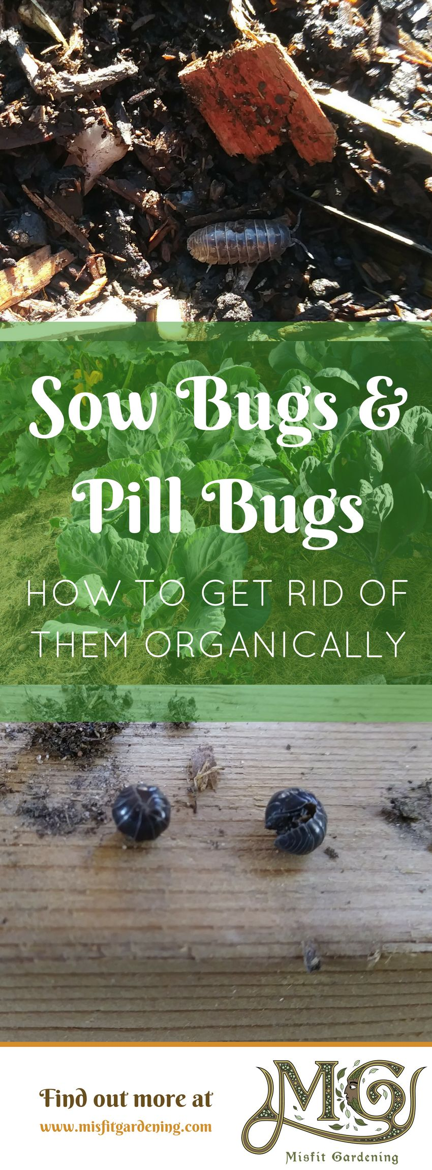 How do you get rid of sow bugs misfit gardening pill